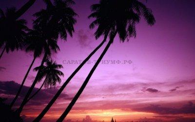 Тропики