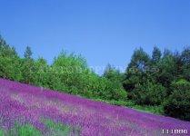 Пейзаж 11