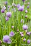 Цветы 3