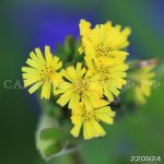 Цветы 6