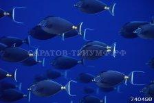 Подводный мир 3