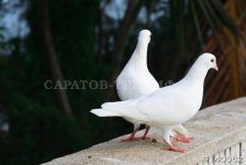 Птицы 1