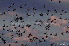 Птицы 4