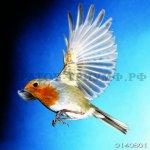 Птицы 5
