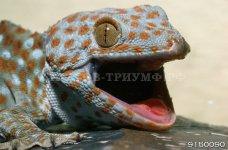 Рептилии 1