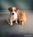 Домашние животные 2