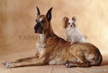 Собаки 2