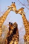 Разные животные 2