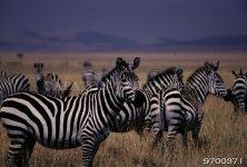 Разные животные 3